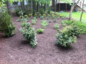 Bulk Shrubs Planting
