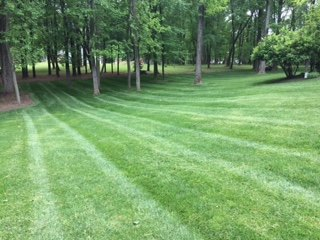Benefits Of Lawn Aeration and Seeding