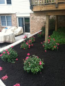 Mulching in Flower Bed