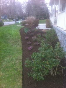Mulching in Front Yard of Residential Home
