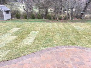 new-lawns1