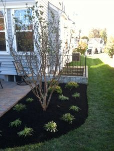 Plant Installation and Mulching
