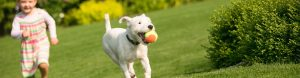 Lawn Care and How to Protect Your Lawn Against Fleas
