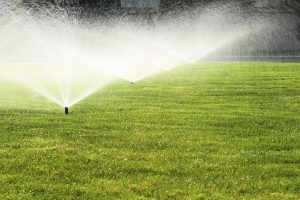 water on your lawn