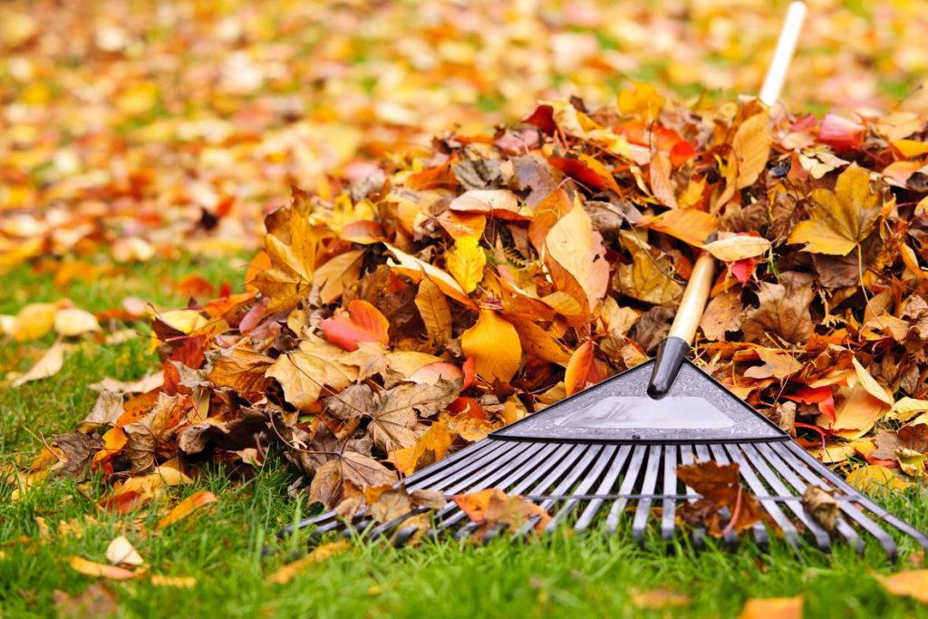Nifty Ways to Use Fallen Leaves