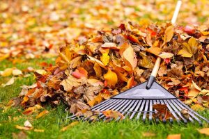 fall yard cleanup checklist