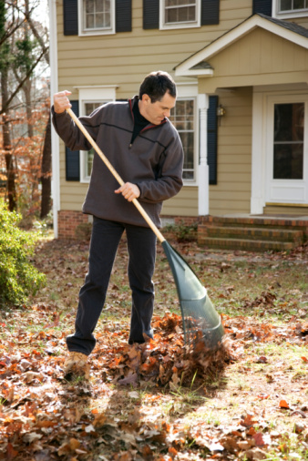 Why You Should Hire a Professional Leaf Removal Service