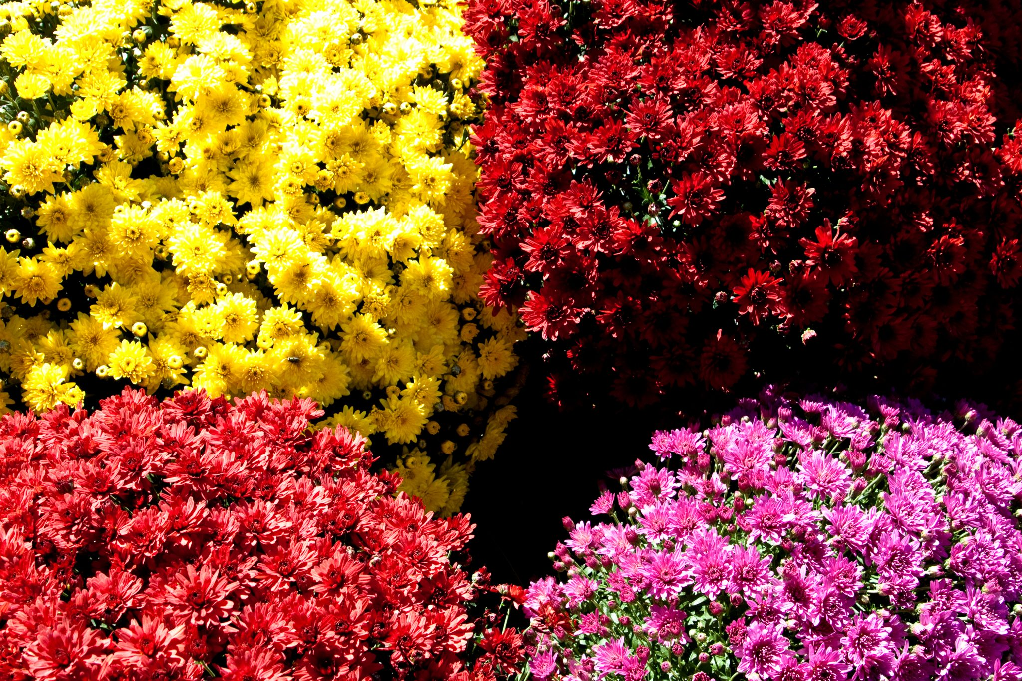 Check out the top 5 flowering annuals to plant this spring.