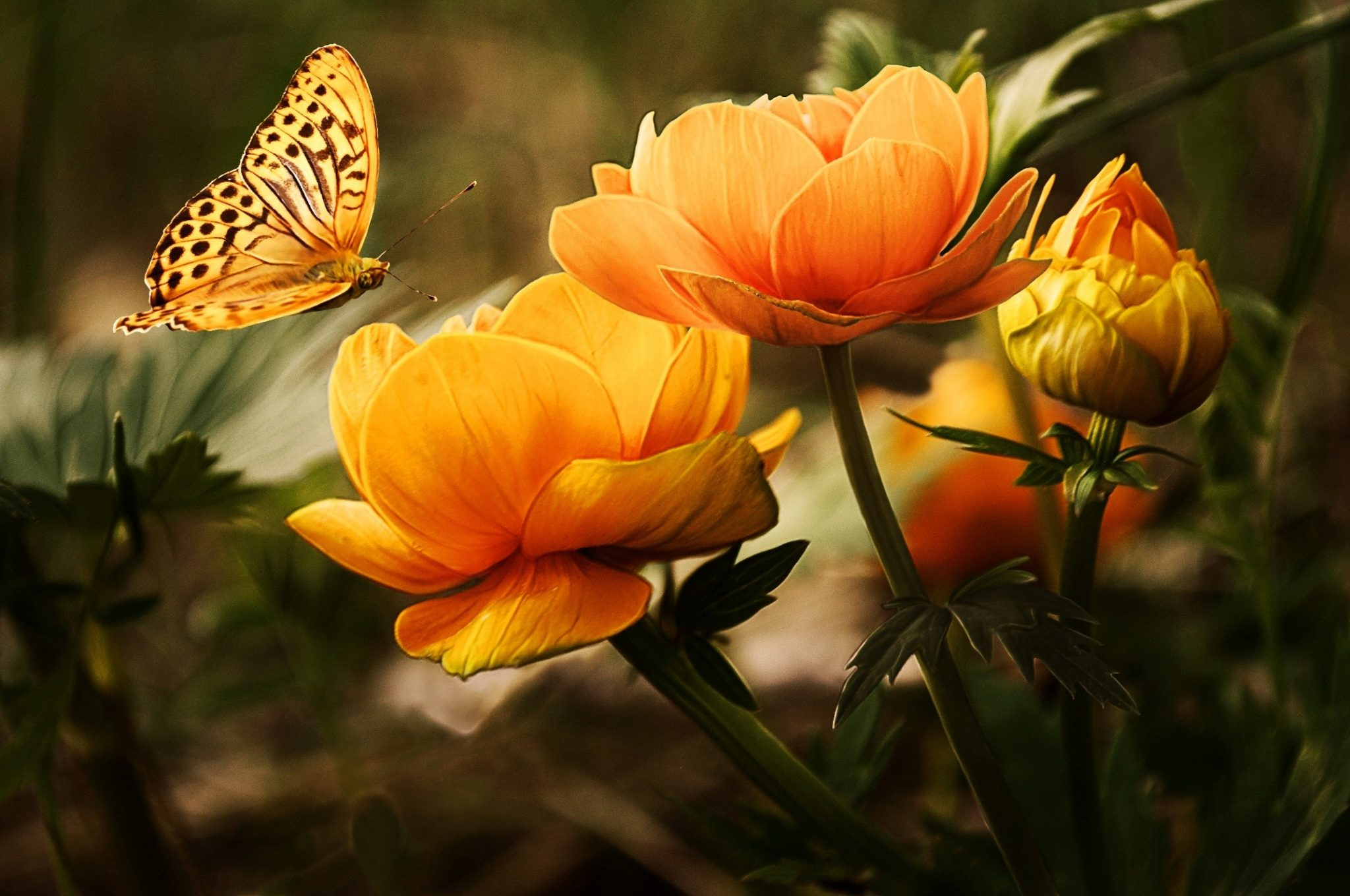 Learn how to create a small-scale butterfly garden in your backyard!