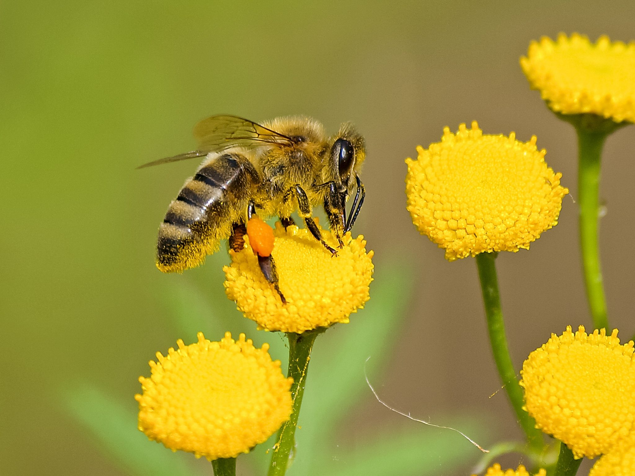 Learn why bees and the pollination process is so important!