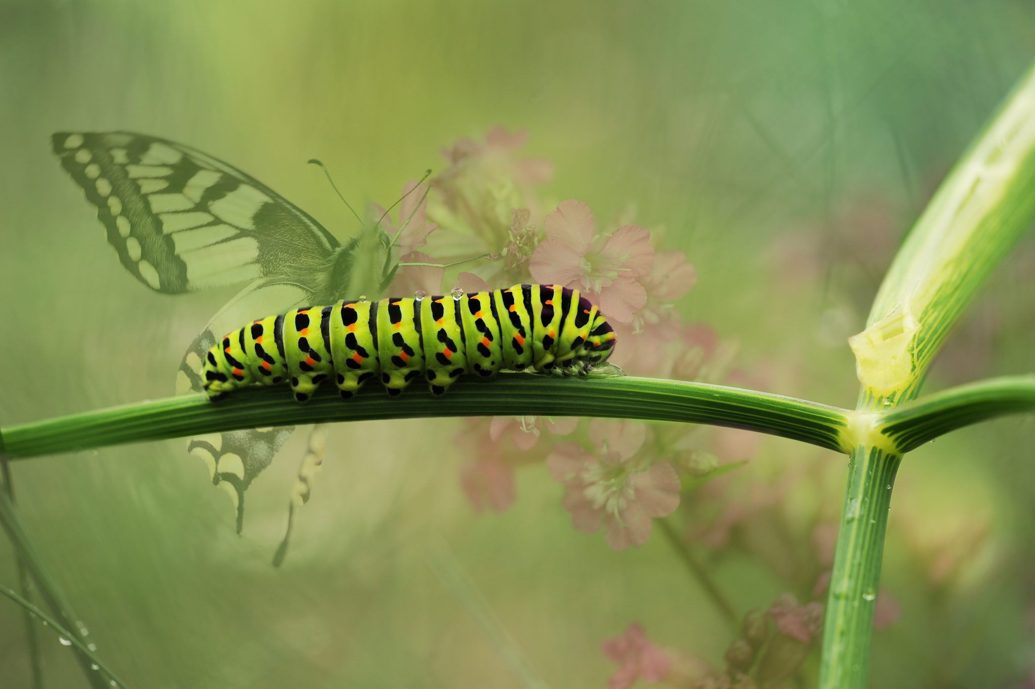 Learn how to control destructive insects in your garden.