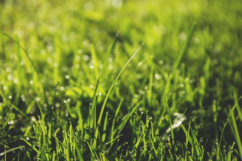Learn how to control crabgrass in your lawn this summer.