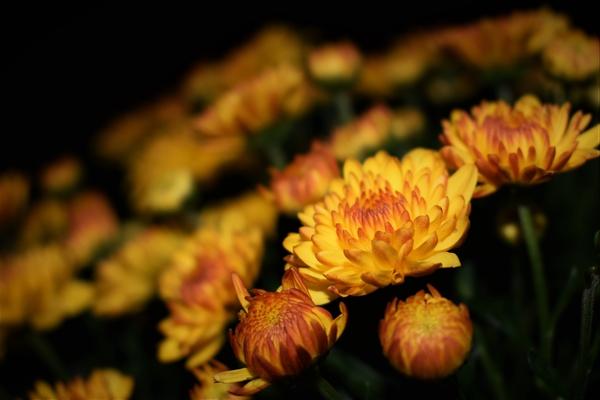 Five Fall Flowering Plants