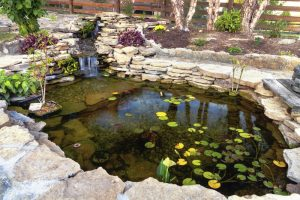 How to Take Care of a Garden Pond