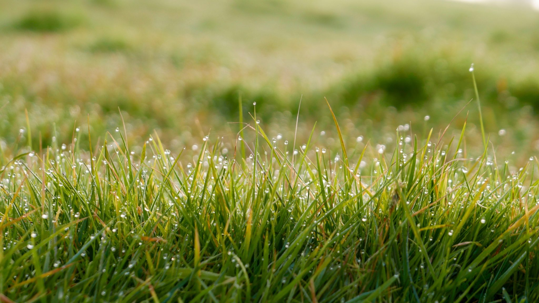 Check out these proper watering tips to make sure your grass and plants are healthy!
