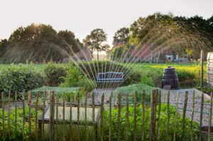 Irrigation for Your Maryland Garden