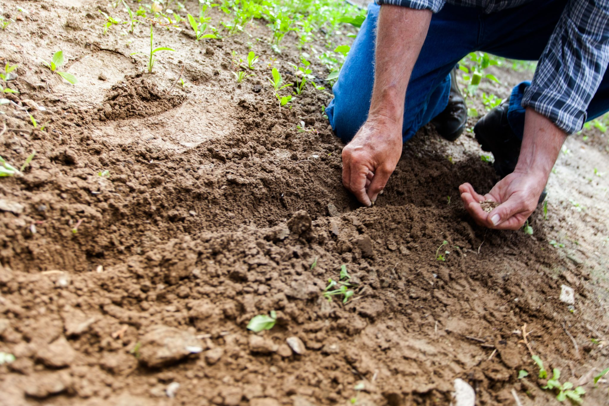 Check out our guide on how to fertilize your lawn.