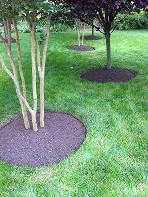 Mulching Tree Rings on Residential Property