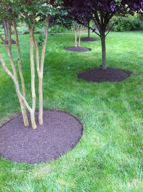Mulching Tree Rings