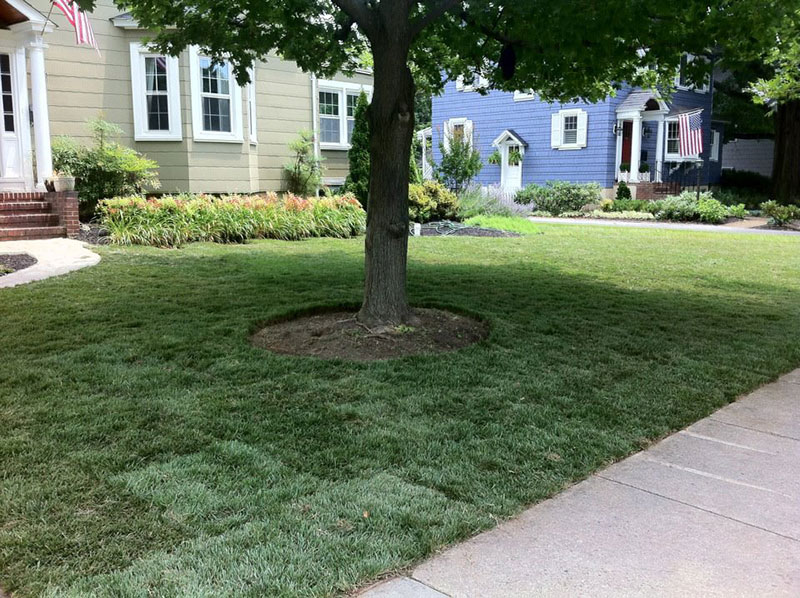 New Lawns and Turf Rejuvenations 1