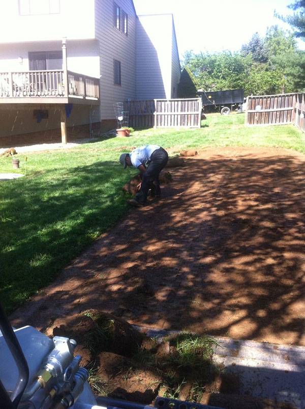 New Lawns and Turf Rejuvenations 7