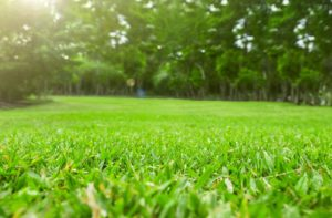 Benefits of Aeration and Overseeding