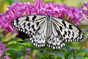 Benefits of a Butterfly Garden