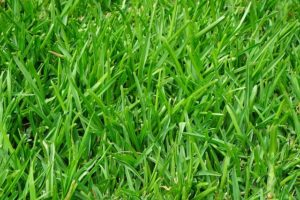 Crabgrass Prevention and Removal
