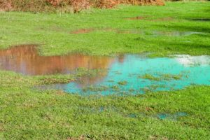 Signs Your Lawn Needs Aeration and Overseeding