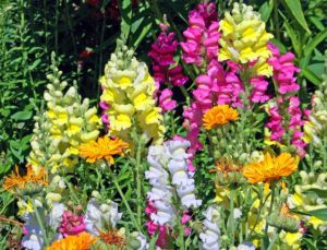 5 Annuals to Plant in Fall
